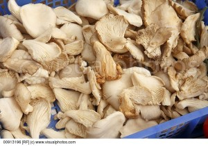 oyster-mushrooms-on-display-at-farmers-market-in-bantry-ireland
